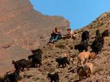 Shepherd Watches Herd