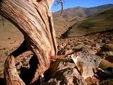 Time Lapse Shadows Move Across Desert Landscape, Tree Stump
