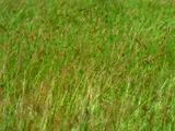 Grass Blows In The Wind