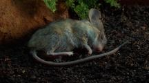 Mouse Decomposes Completely