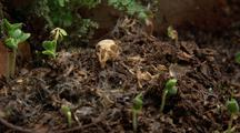 Skeleton Is Surrounded By New Plant Growth