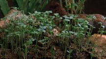 Long Shot Plants Surround Mouse Skeleton, (Static Scene)