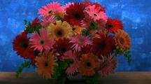 Gerbera Daisy Bouquet Dies, Blue Background Turns To Brown