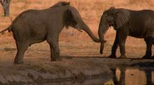 Group Of Elephants Drinking From A Watering Hole, Africa