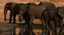 Group, Herd Of Elephants At The Watering Hole, Africa