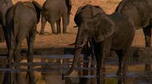 Elephant Walking Into The Water Hole And Getting Some Water, Africa