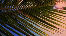 Close Up Of Palm Fron In Wind