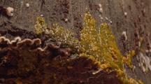 Physarum Plasmodium Pulsating On Surface Of Log, Close Up