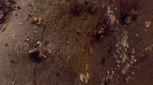 Physarum Veins On Surface Of Log, Medium Shot #1
