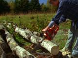 Man Cuts Wood With Chainsaw