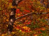 Forest Of Trees In Autumn Colors