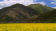 A Field Of Mustard In The Himalayas
