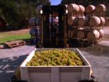 Grapes Processed At Winery