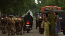 Traffic, Pedestrians And Cows On Busy Street