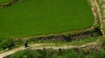 Woman Walks Near Field Carrying Heavy Load On Head
