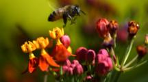 Slow Motion Bee Pollinates Flowers