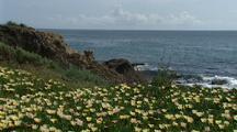 Ice Plant Grows, Big Sur Coastline