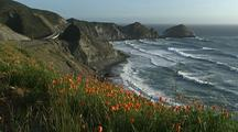 Rugged Big Sur Coast With Waves Crashing And Flower Foreground