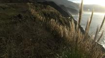 Pampas Grass Grows Above Big Sur Coastline