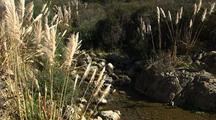 Creek And Pampas Grass