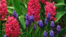 Close Up Of Wildflowers And Hyacinths
