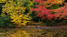 Panorama Of Duck Pond With Trees In Fall Colors
