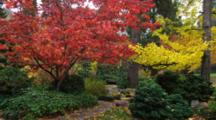 Garden With Trees With Red And Yellow Fall Colors