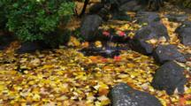 Waterfall And Pond With Red And Yellow Leaves