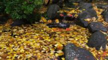 Pan Of Waterfall And Pond With Red And Yellow Leaves