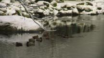 Ducks In A Pond In Winter