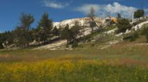 Panorama Of Mammoth Hot Springs, Yellowstone