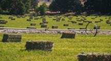 Field Of Bailed Hay, Panorama