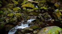 Stream And Waterfall In Temperate Rainforest