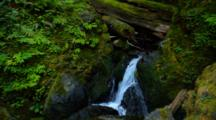 Waterfall In Dense Temperate Rainforest