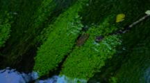 Dense Green Forest Plants Reflected In Pool