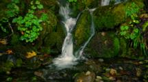 Waterfall In Temperate Rainforest With Moss And Ferns