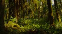 Steadicam Walk Through Hoh Rainforest