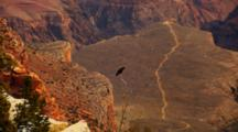 Black Bird Perched Over Grand Canyon, Trail In Distance