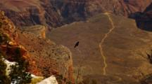 Bird, Probably Crow Or Raven, Perched Over Grand Canyon, Trail In Distance
