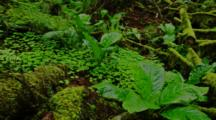 Plants On Floor Of Temperate Forest