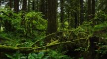 Plants, Moss Covered Branch On Floor Of Temperate Forest