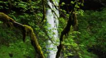 Waterfall Behind Moss Covered Tree