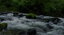 Fast Flowing Creek In Temperate Forest