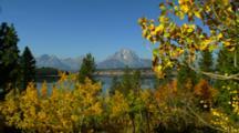 Mt. Moran Across Jackson Lake With Fall Trees