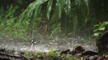 Rain Drops Hit The Ground, Hawaii