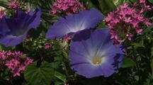 Purple Flowers, Hawaii