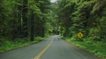 POV Driving In Redwood National Park