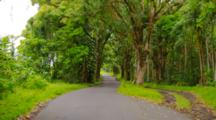 POV Driving On Narrow Tropical Tree Lined Road