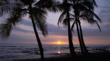 Palm Trees Silhouetted By Sunset