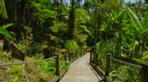 Wooden Path Through Tropical Forest